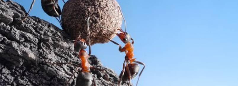 Curiosidades sobre as formigas