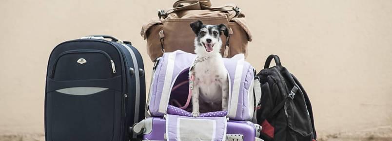 Dr. Alexandre pergunta: Viajando de férias com o pet.  Como proceder?