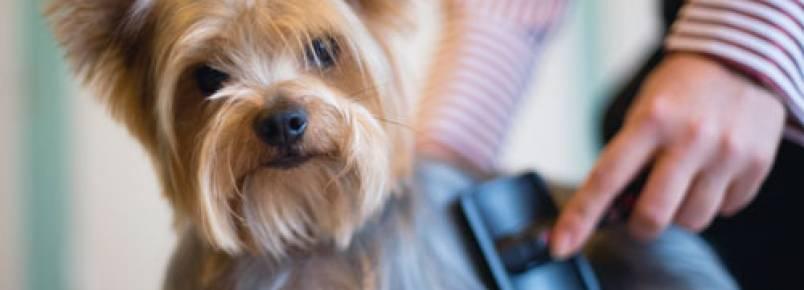 É possível escovar demais os pelos dos cães?