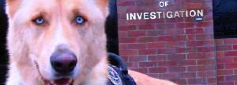 """Maus tratos a animais são classificados como """"crime grave"""" nos Estados Unidos"""