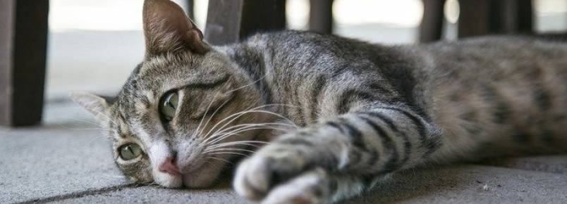 Demência em cães e gatos pode ser culpa dos donos, diz estudo