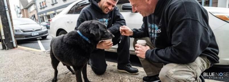 Após passar 15 anos acorrentado, cachorro visita a praia pela primeira vez