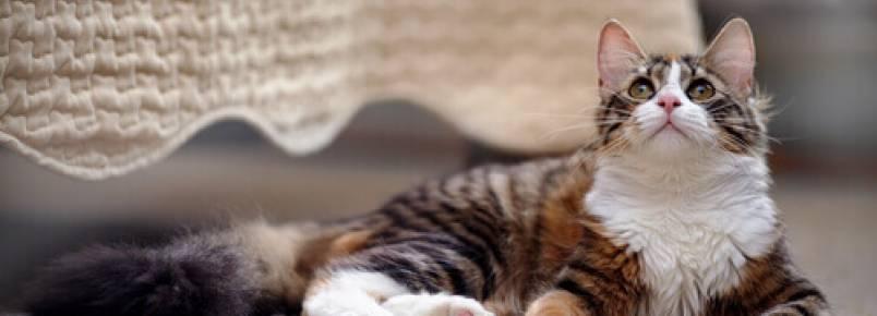Como ter um gato em casa