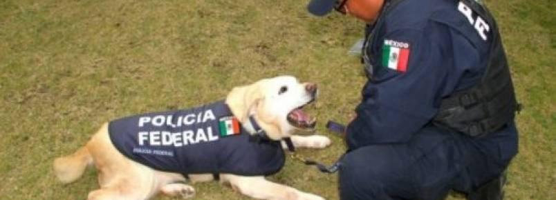 México não irá mais eutanasiar cães policiais que estão em idade de se aposentar