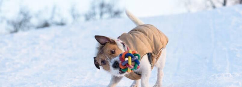 Por que o cão sacode os brinquedos?