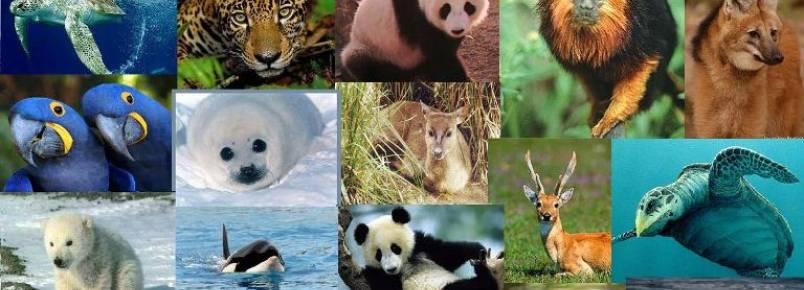 Ministério cria força-tarefa para proteger animais ameaçados de extinção
