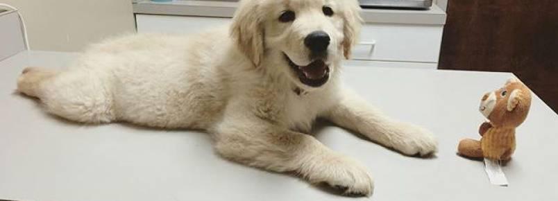 9 perguntas que devem ser feitas na primeira consulta veterinária