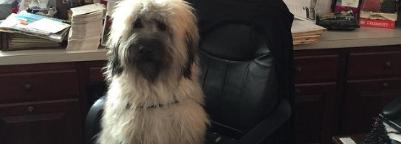 Dia nacional de levar os cães ao trabalho foi comemorada nesta sexta nos Estados Unidos