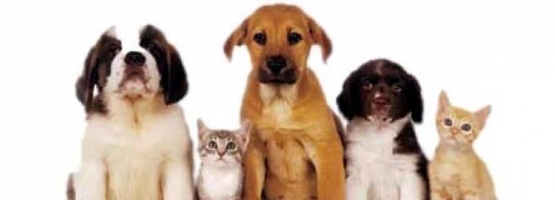 Canil Municipal abre neste domingo para doação de animais
