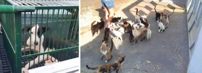 Moradores são autuados por maus-tratos a animais em Fernandópolis