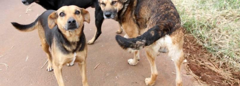 Programa incentiva adoçãode cães