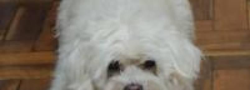 Cães medrosos: como agir?