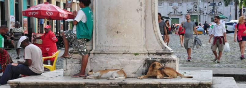 Salvador tem mais de 100 mil cães vivendo nas ruas