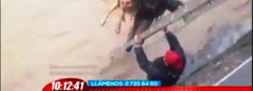 Vendedor ambulante salva a vida de quatro cães em Santiago do Chile