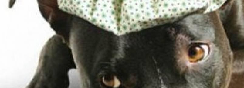 Conheça as principais doenças de cachorros, a prevenção e o tratamento delas