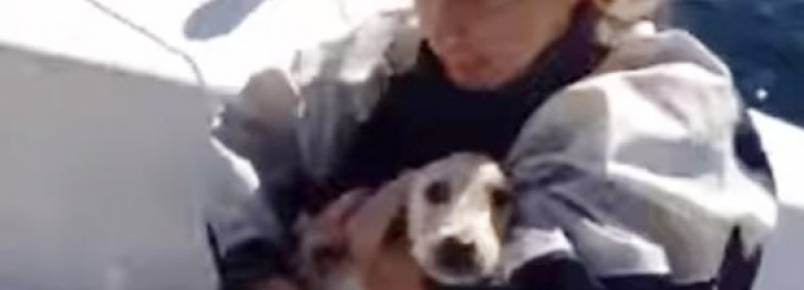 Velejadores resgatam cachorro no mar e comovem internautas