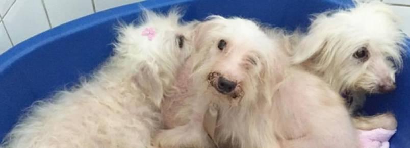Cães resgatados de incêndio em São Paulo recebem os primeiros cuidados