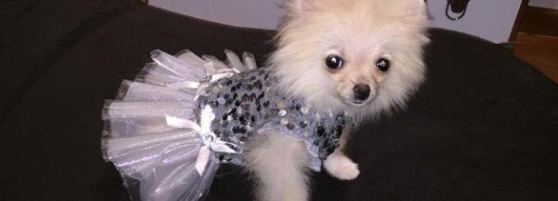 Conheça a nova cachorra de Celso Zucatelli