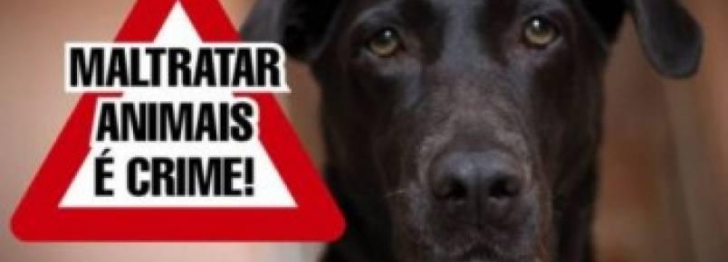Protetores alugam casa para abrigar animais abandonados e pedem doações