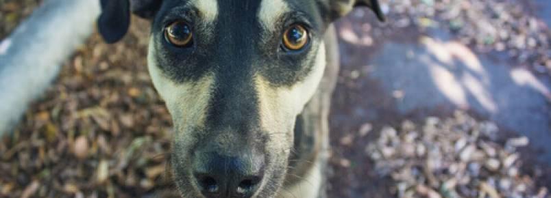 A reação de um cachorro vítima de maus-tratos ao receber o primeiro carinho