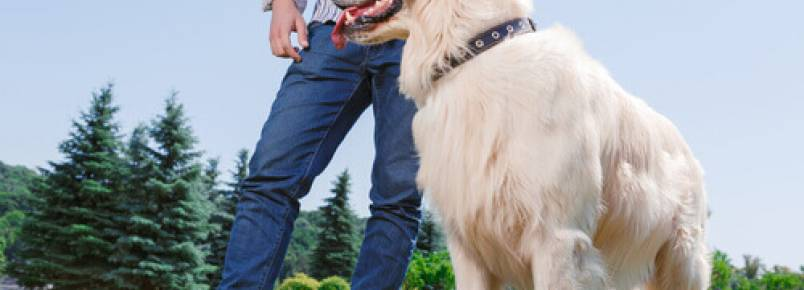 Um cão te ajuda a cuidar do coração