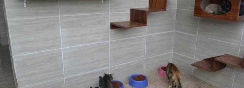 Gatil da Prefeitura recebe melhorias para alojar animais retirados das ruas