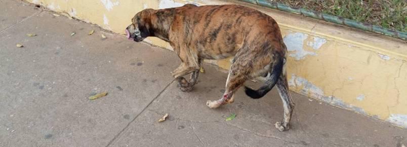 Injusta agressão. Cão é machucado em Itanhomi (MG)