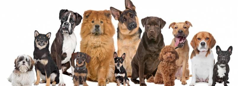 Vem aí: 2º Encontro dos Apaixonados por Cães de Monlevade (MG)