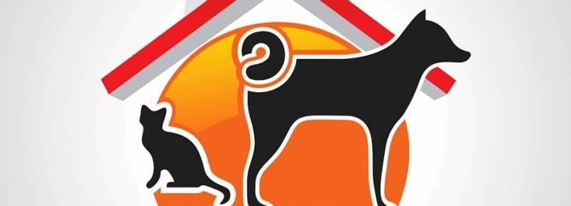 ONG resgata e encaminha para adoção animais abandonados em Jequié (BA)