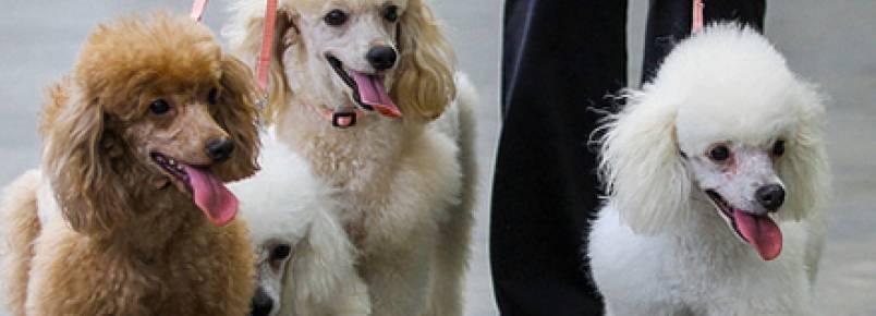 9 cuidados com seu cão na hora do passeio
