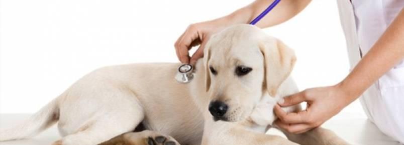 Anemia nos cães