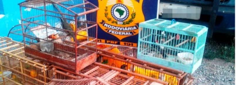 Homens são detidos por vender ilegalmente pássaros silvestres em Itaberaba