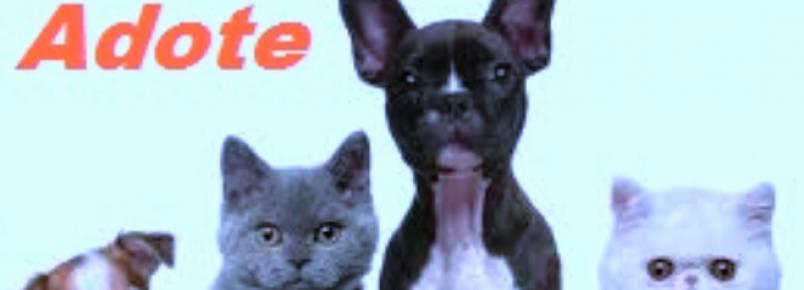 Continente Shopping realiza mais um evento para adoção de animais