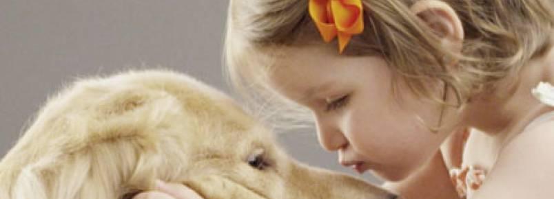 Projeto PetsdoBem garante sustento a animais abandonados