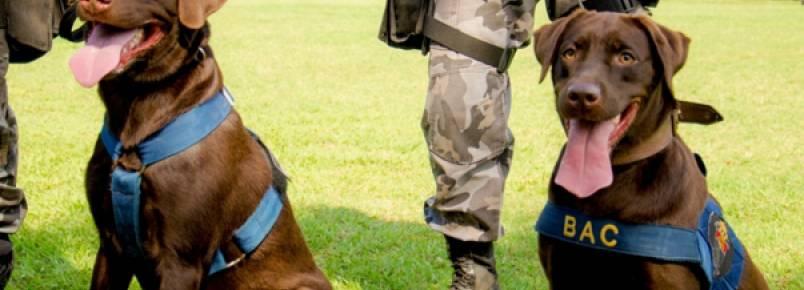 BAC prepara cães farejadores de explosivos para as olimpíadas de 2016