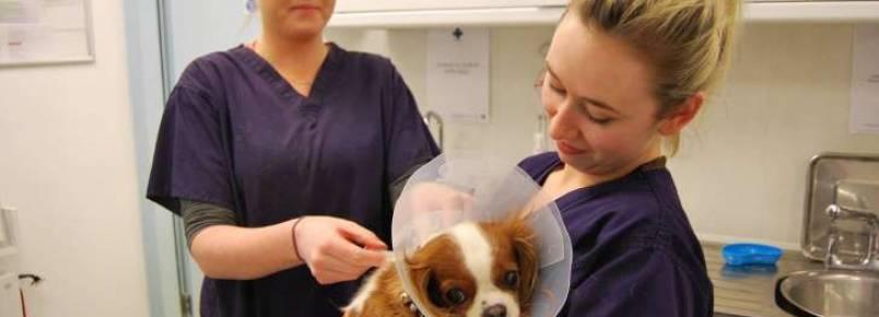 Clínica veterinária móvel atende 18 mil animais por ano na Irlanda