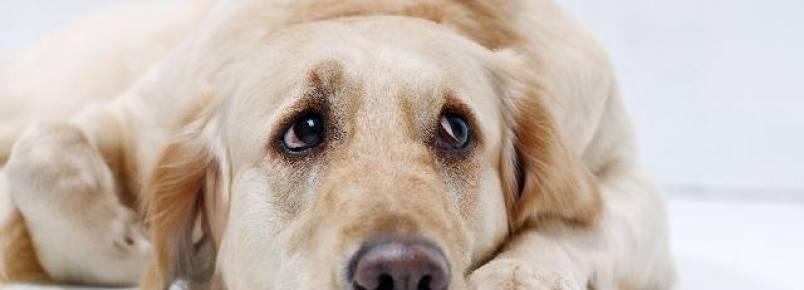 O que fazer se o cachorro engasgar?