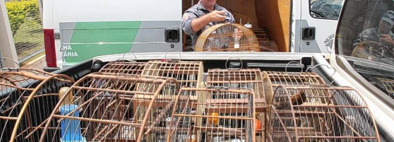 59 pássaros silvestres são apreendidos