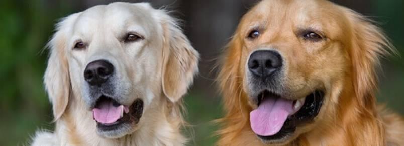 Por estas razões, adotar um cãozinho mudará sua vida