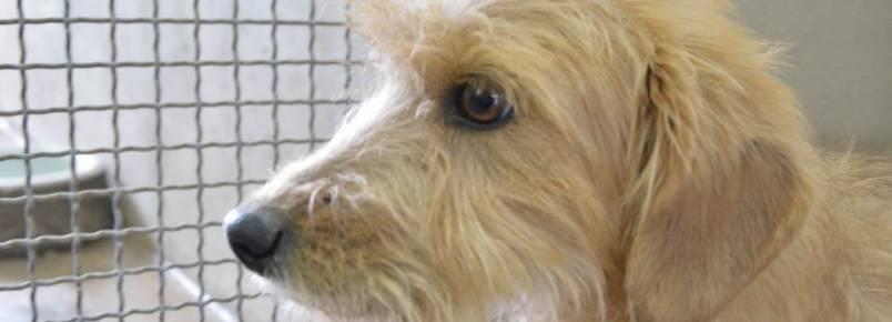 Em cinco meses, mais de 300 cães já passaram pelo CRAR