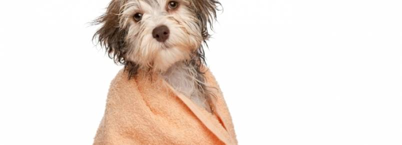 Aprenda como dar banho a seco nos animais para economizar água
