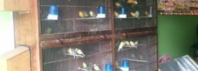 Denúncia anônima leva a apreensão de 55 aves silvestres em Mandaguari