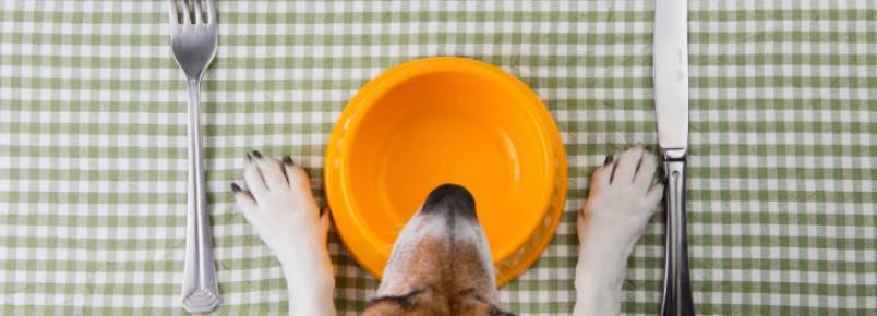 Moda da comida natural para cães chega ao mercado brasileiro