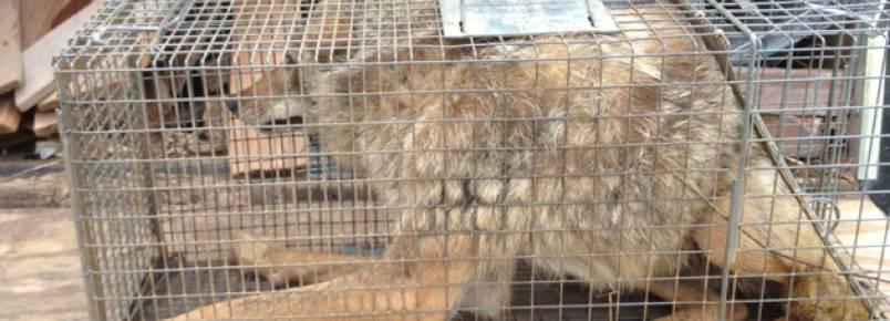 Investigação revela evidências sombrias de abusos a animais em programa do Animal Planet