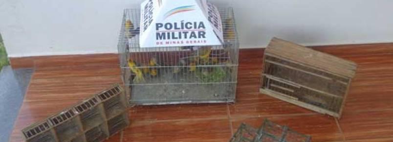 Três pessoas são presas com pássaros da fauna silvestre em Araguari
