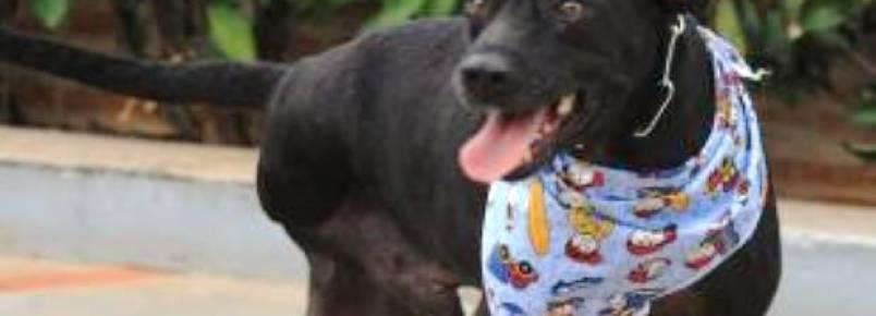 """Animais com problemas físicos são """"esquecidos"""" na hora da adoção"""
