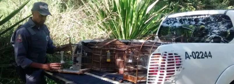 Homem é autuado em mais de R$ 5 mil por manter aves em cativeiro