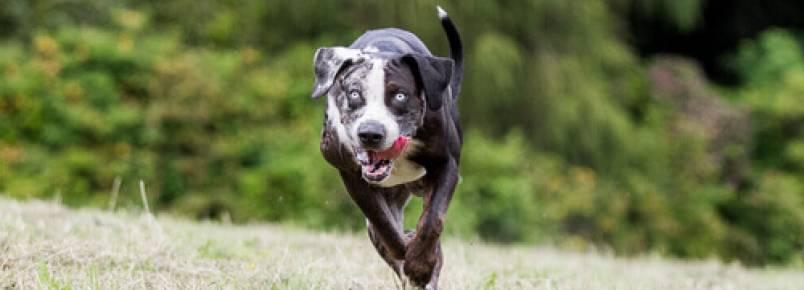 Finalmente estão proibidas as corridas de cachorros