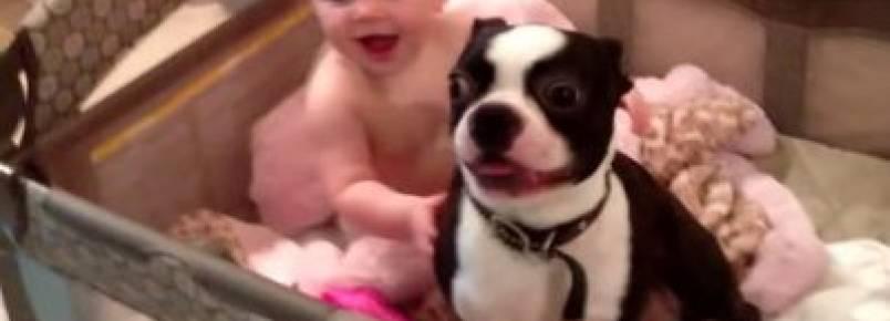 A mamãe mandou sair mas nada tira esse cachorrinho do berço de sua irmã humana