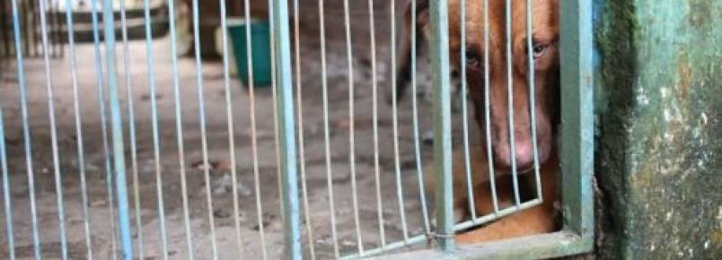 Em Manaus, vizinhos pedem ajuda para cão que está preso em uma casa abandonada